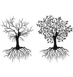 Trees with roots vector