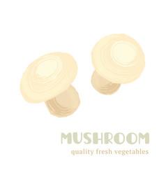 Fresh mushroom isolated on white background vector