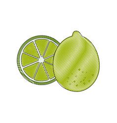 Isolated two lemon vector