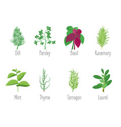 herb set dill parsley basil mint rosemary vector image