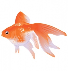 Goldfish veil tail vector
