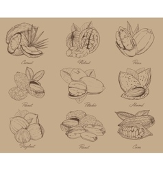 Engraved nuts isolated set of mixed nuts vector