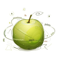 Apple vitamins and minerals vector image vector image