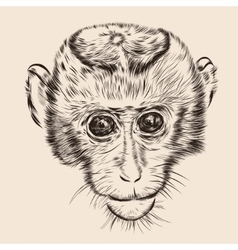 Sketch monkey face hand drawn doodle vector
