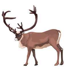 Large reindeer isolated vector
