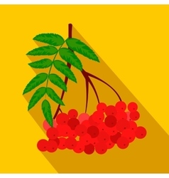Branch of red rowan flat icon vector