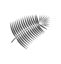 Coconut leaf icon vector