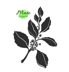 mate branch shape vector image vector image