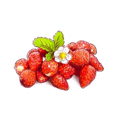 Wild strawberry with flower sketch with watercolor vector