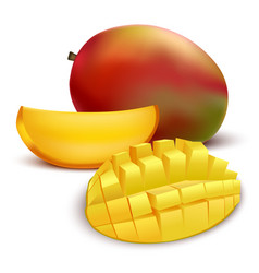 realistic detailed fruit mango vector image vector image