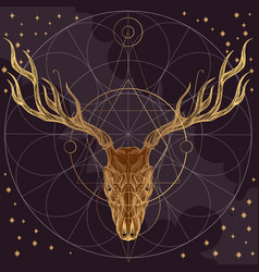 sketch of deer skull on dark purple background vector image vector image