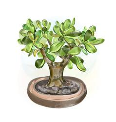 watercolor money tree bonsai vector image