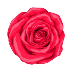 Beautiful red rose with the effect of a watercolor vector