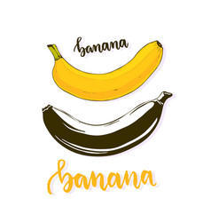 Banana isolated banana fruit silhouette and vector