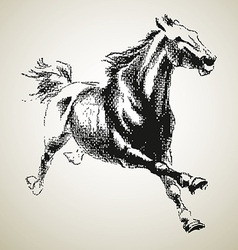 Sketh of horse vector image vector image