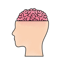 Human face silhouette with brain exposed in vector