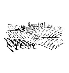 Wineyard vector