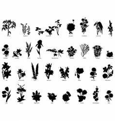Plants collection vector