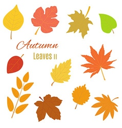 Realistic autumn leaves vector