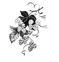 Hand drawn black and white of grape vector