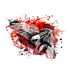 color of a flying eagle vector image