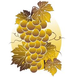 golden vine vector image vector image