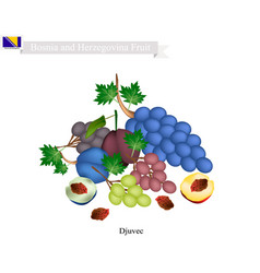Plum and grape the popular fruit in bosnia and he vector