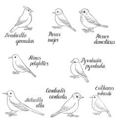 set of birds vector image vector image