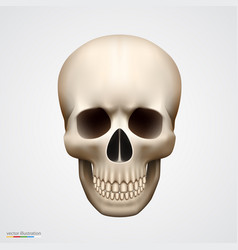 human skull isolated on white vector image vector image