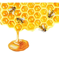 Watercolor Honeycomd and bee vector image vector image