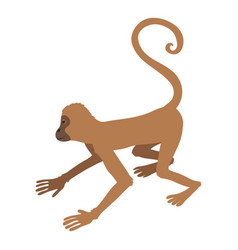 playful monkey icon cartoon style vector image