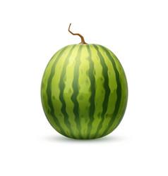 Realistic watermelon fruit 3d vector