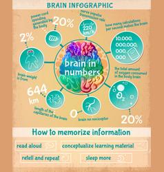 cartoon human brain infographic concept vector image