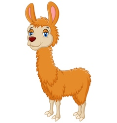 Llama cute cartoon vector