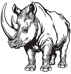 rhino black white vector image