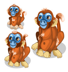 Brown funny monkey with blue face isolated vector