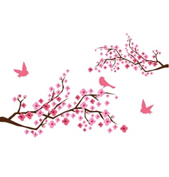Sacura branches with birds vector