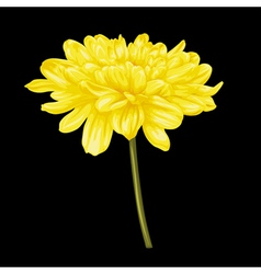 Yellow dahlia with the effect of a watercolor vector