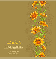 Calendula background vector