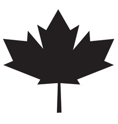 maple leaf icon on white background maple leaf vector image vector image