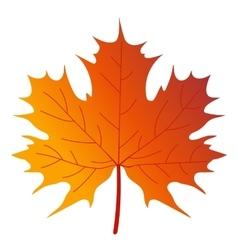 Maple tree leaf vector