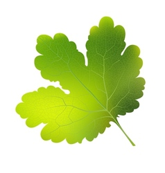 currant leaf EPS10 vector image vector image