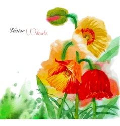 Watercolor background with poppy and flowers vector