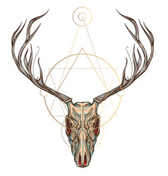 Sketch of deer skull for tattoo printing on vector