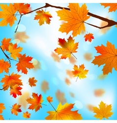 Autumn tree maple leaves against the blue EPS 8 vector image