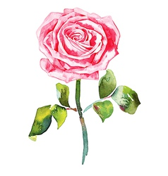 hand draw ornate romantic watercolor rose vector image
