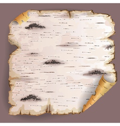Piece of birch bark vector