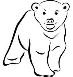 little bear vector image vector image