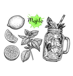 Mojito drink and ingredients vector