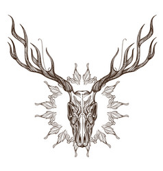 sketch of deer skull with decorative floral vector image vector image